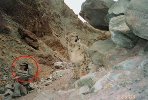 Camera trap. Photo Snow Leopard Conservancy