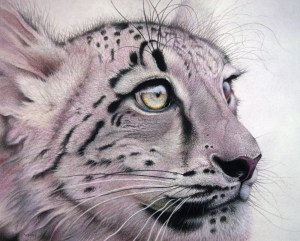 "Martin Aveling's work ""An eye to the future"" Snow Leopard"