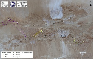 Tracking snow leopards in Mongolia. Map from Snow Leopard Trust blog.